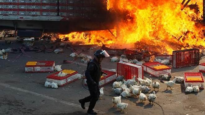 Caminhão de transporte de animais vivos em chamas durante protestos no México