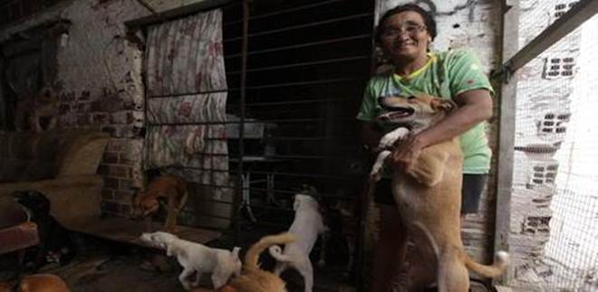 Abrigo de animais pede doações de ração para cães e gatos, no Recife