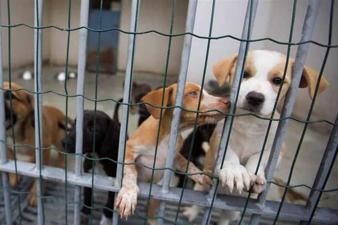Portugal: Aprovado fim do abate de cães e gatos em centros municipais