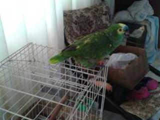 Animal em cativeiro é recuperado em Ponta Grossa (PR) e tutor notificado