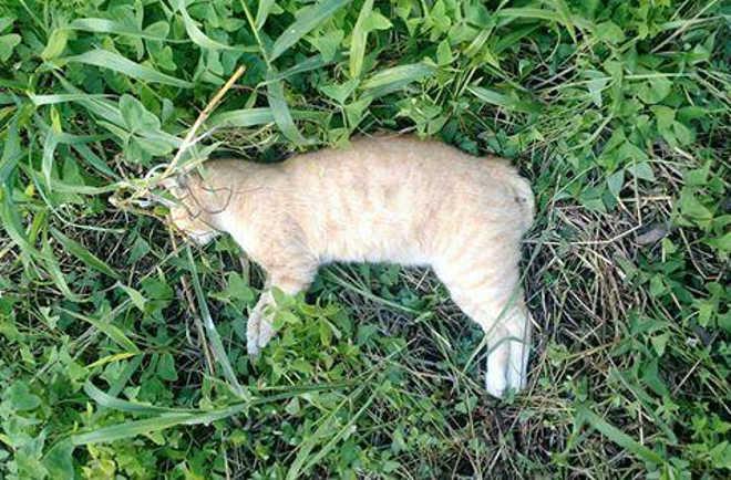 Lista de animais mortos por suspeita de envenenamento cresce novamente em Umuarama, PR
