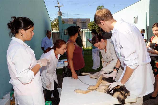 Prefeitura abre inscrições para castração gratuita de cães em Curitiba, PR