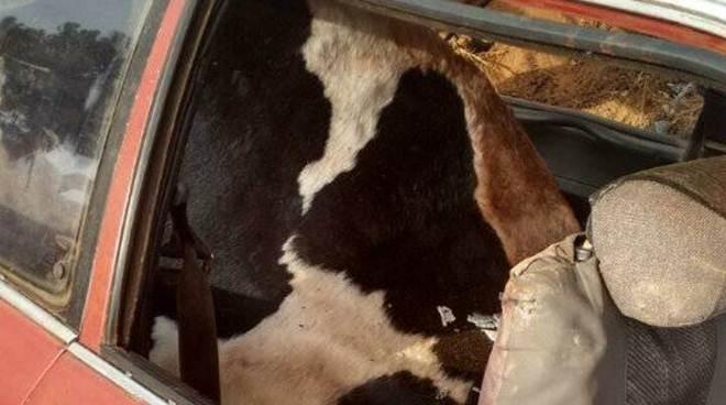 Veículo é encontrado em Catuípe (RS) com animais sequestrados