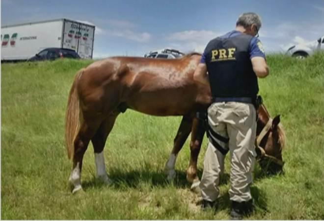 Polícia Rodoviária Federal (RS) alerta para chance de mais acidentes com animais no inverno