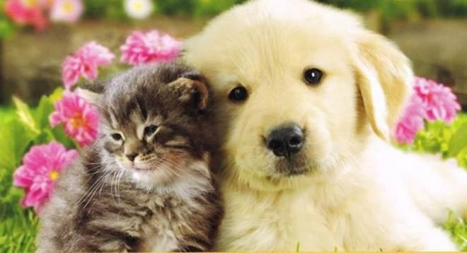 Programa de castração de Tapejara (RS) já castrou 25 gatas e 126 cadelas