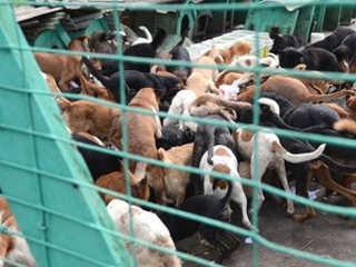 Acumuladores de Porto Alegre (RS) têm em média 36 animais, diz pesquisa