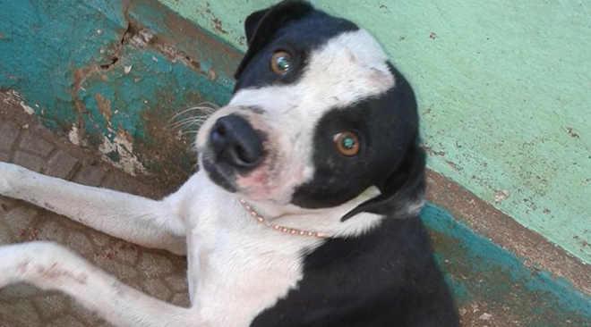 Cachorro é mutilado após entrar no pátio de uma casa em São Borja, RS