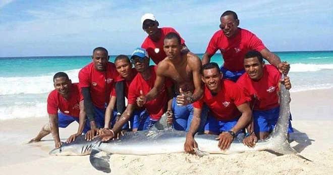 Tubarão morre após ser capturado para tirar selfies com turistas