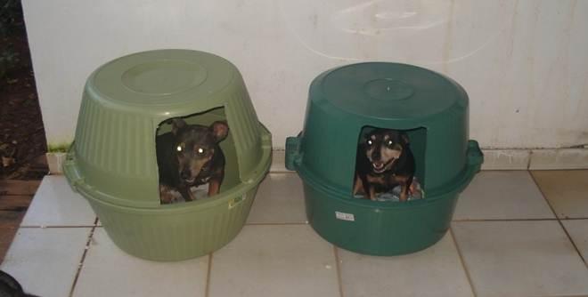Prefeitura de Brusque (SC) estuda implantar alojamento para animais de rua