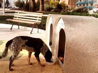 ONG Patas Felizes realiza campanha para instalar casinhas ecológicas para os cães de rua em Nova Veneza, SC
