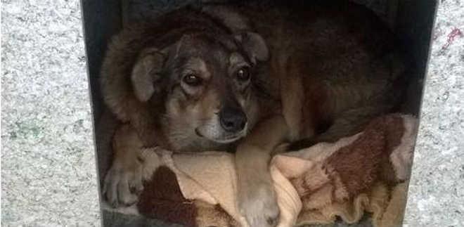 Projeto arrecada dinheiro para comprar casinhas de cachorro contra o frio no Sul do país