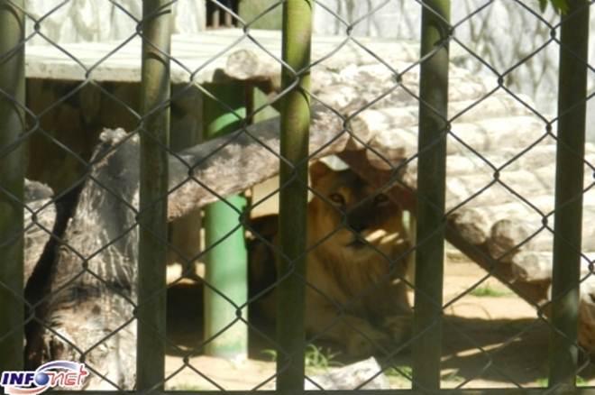 Ação pede interdição no zoológico do Parque da Cidade em Aracaju, SE