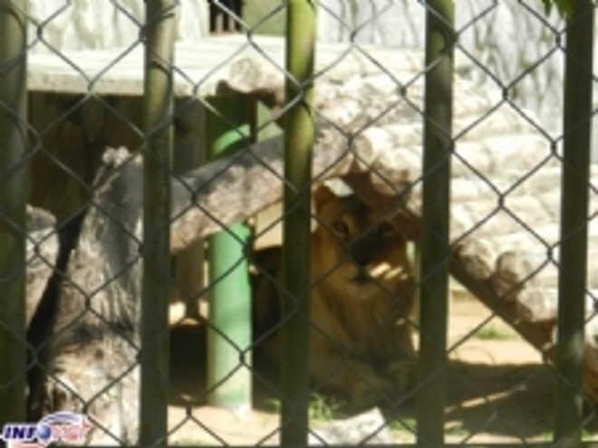 Ação pede interdição no zoológico do Parque da Cidade em Sergipe