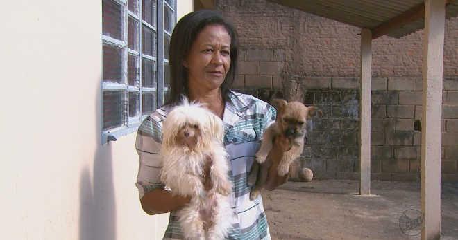 SP: Moradores de 2 cidades denunciam casos de cães mortos envenenados