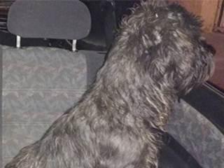 Casal dorme em carro há 1 semana para salvar cães em Campinas, SP