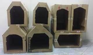 Clínica fabrica casas para animais de rua em Santo André, SP