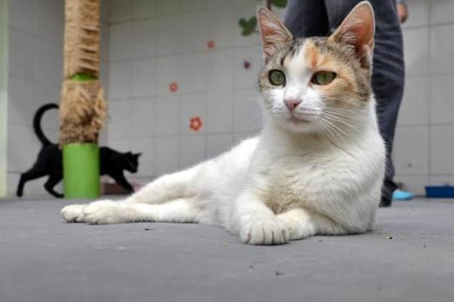Miaudote de São Caetano (SP) disponibiliza 80 animais para adoção