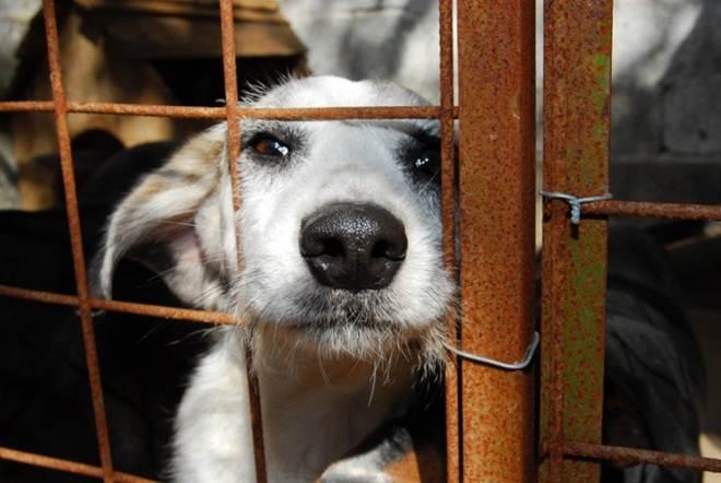 Denúncias de maus-tratos a animais mais que quadruplicam em São Paulo, SP