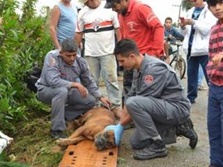 Cão é resgatado após temporal que causou destruição em São Roque, SP