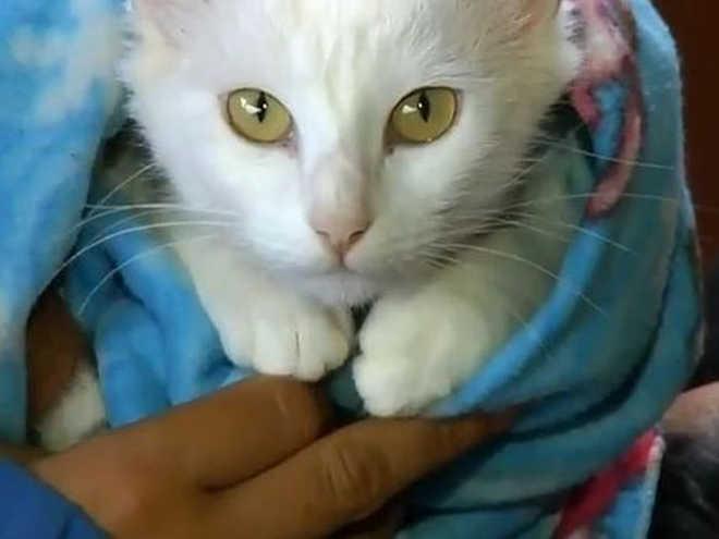 ONG castra e coloca chip em animais de estimação de graça em Botucatu, SP