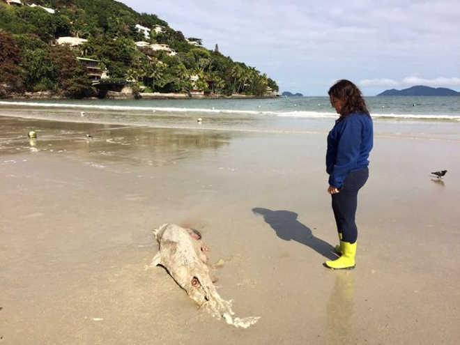 Baleia encontrada morta encalha no Canto do Tortuga, em Guarujá, SP