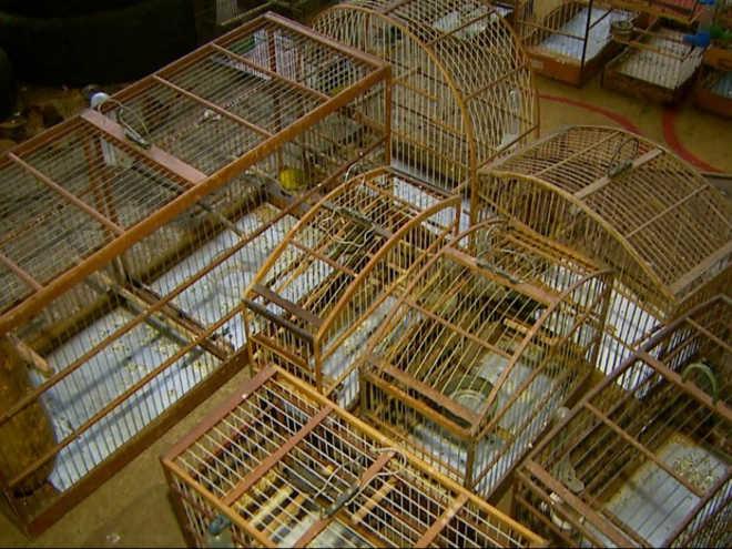 Homem é multado em R$ 120 mil por maus-tratos a pássaros em Ribeirão Preto, SP