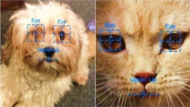 Aplicativo usa reconhecimento facial para identificar cães e gatos achados e perdidos
