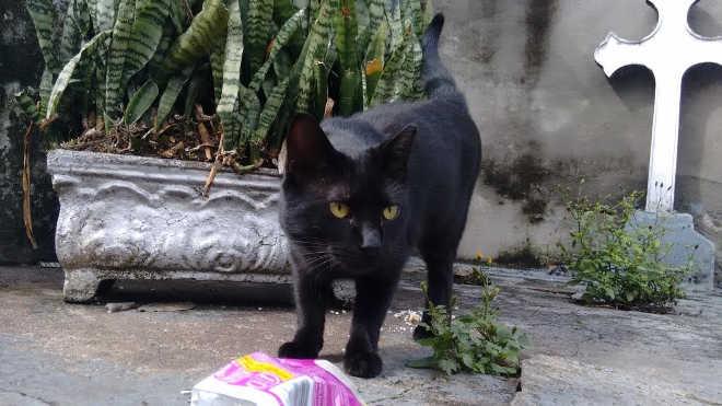 Dezenas de gatos mortos no cemitério da Quarta Parada, em SP