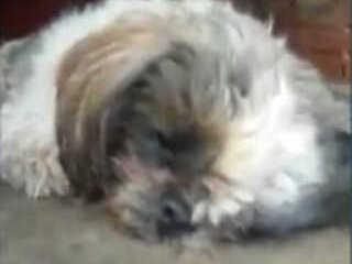 Vídeo de cão morrendo revolta internautas