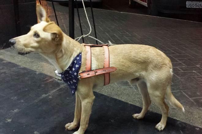 Policiais militares adotam e dão nova casa a cachorro abandonado