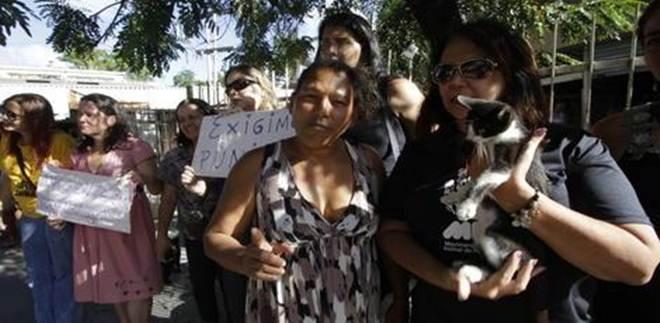 Investigação sobre envenenamento de gatos na Encruzilhada começa nesta quarta-feira em Recife, PE