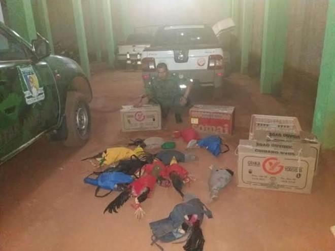 Polícia fecha 'rinha de galo' e prende envolvidos na região norte do TO