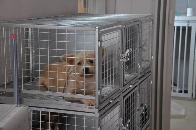 Prefeitura de Videira (SC) abre inscrições para castrações de cadelas