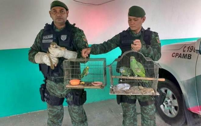 Batalhão Ambiental resgata animais no bairro Vila da Prata, Manaus, AM