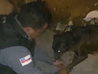 Cadela é achada em rua com patas e pescoço amarrados em Manaus, AM