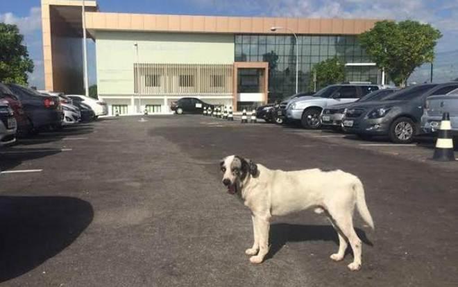 Grupo de servidores do Tribunal de Justiça do AM se une para ajudar cachorros