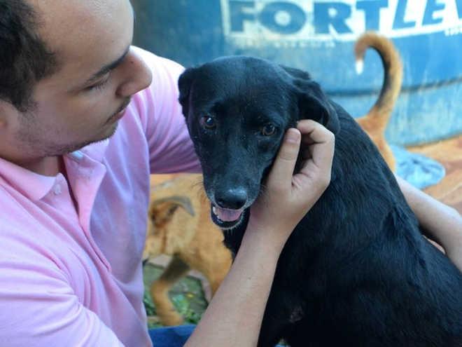 Após 6 meses, cachorra vítima de zoofilia aguarda adoção no Amapá