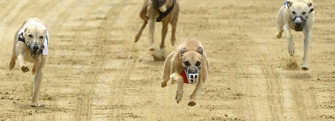 Nova Gales do Sul é o primeiro Estado australiano a proibir corridas de galgos