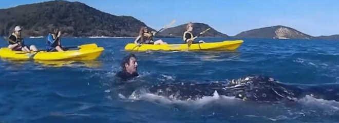 Baleia se aproxima de canoístas e 'pede' ajuda para se livrar de corda; vídeo