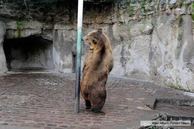 Organizações pedem para frear o leilão de animais do zoológico de Mendoza após morte de 60 animais