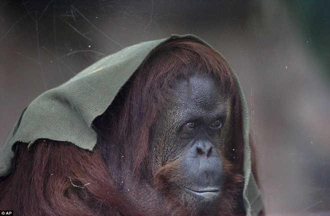 Imagens impressionantes de animais revelam os últimos dias de um zoológico de 140 anos na Argentina