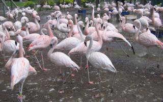 Argentina: pedem justiça por dez flamingos mortos no Zoológico de La Plata