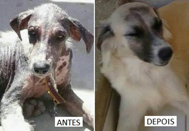 Jovem grava vídeos de cães abandonados em Paulo Afonso (BA) e a difícil situação da Ardap