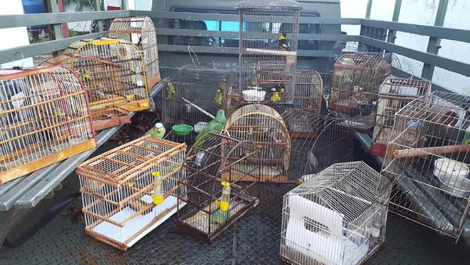 Animais silvestres são apreendidos dentro de residência em Prado, BA