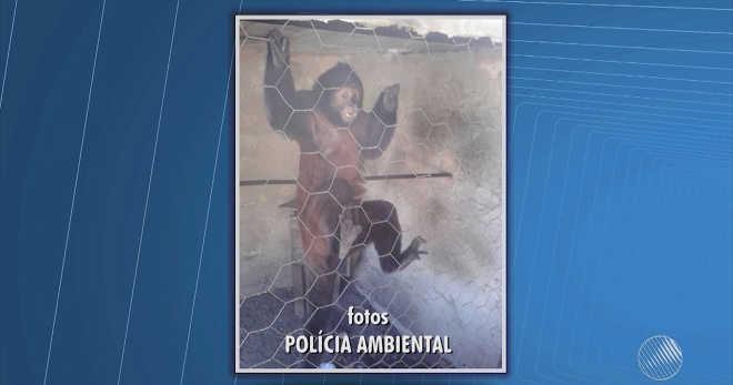 Mais de 30 animais silvestres são apreendidos em cativeiro em Prado, BA