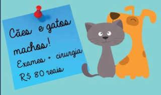 Hospital veterinário da UFBA castra animais a preços acessíveis em Salvador, BA