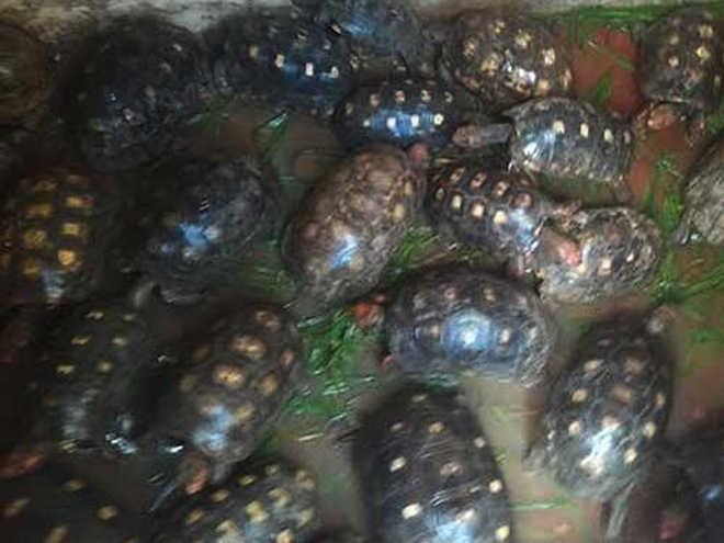 Polícia ambiental resgata cerca de 20 mil animais na Bahia