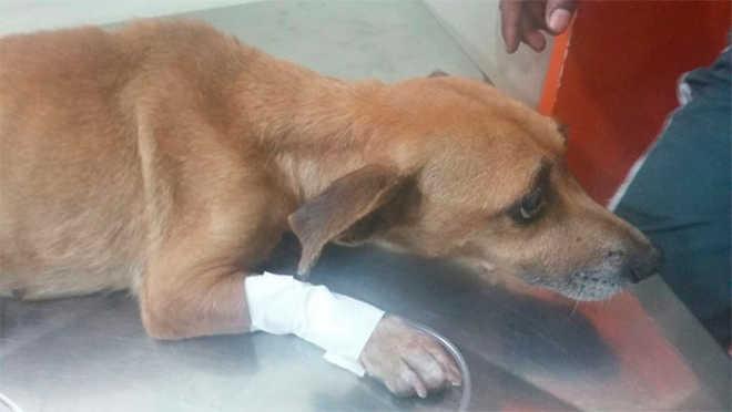 PM resgata cão atropelado e faz campanha de adoção em Salvador, BA