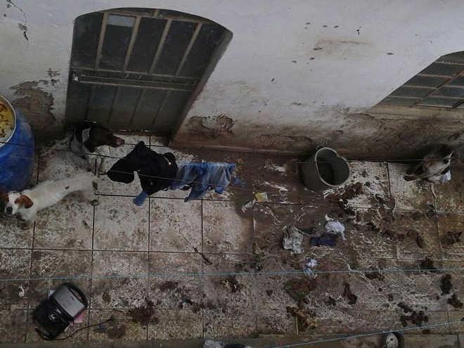 Vizinhos denunciam flagrante de crueldade e maus-tratos a cães em Vitória da Conquista, BA