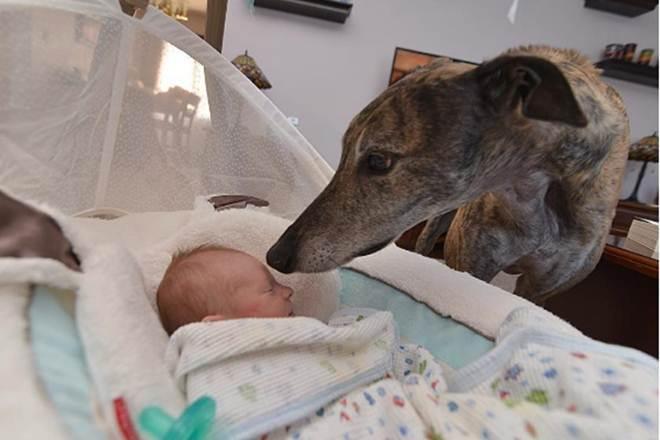 Bebê conquista cachorro que tinha medo de ter contato com humanos